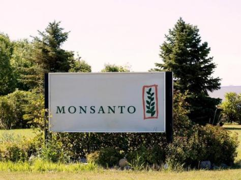 FILE PHOTO: Monsanto's research farm is pictured near Carman, Manitoba